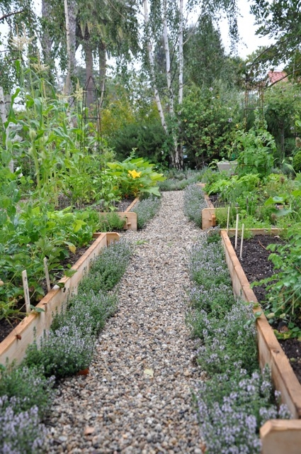 Vegetable Gardening 101 - Image 3