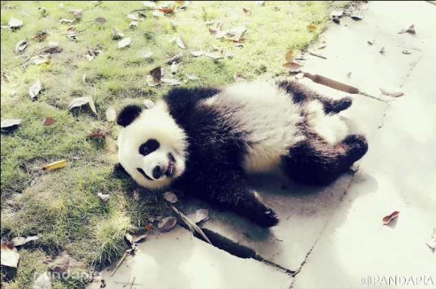 Woderful pandas' filtered photos - Image 2