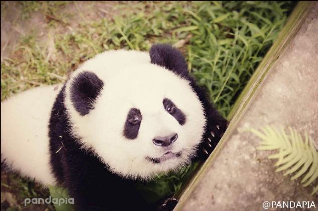 Woderful pandas' filtered photos - Image 3