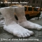 2 feet of snow fell this morning - Funny Things