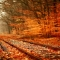 Autumn leaves - Fantastic Photography