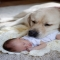 Dogs are the best babysitters - Pets