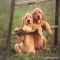 Golden Retriever Puppies - Adorable Dog Pics
