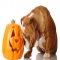 Health Benefits of Pumpkin for Dogs - Dog fun