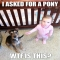 I asked for a pony... - Now that is funny
