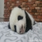 I want to keep on sleeping, I do not want get up. - Panda