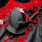 Remembrance Day - News Stories
