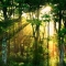 Sunbeams Through the Trees - Art for home and cottage