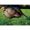 DSD turkey decoys - Turkey hunting