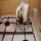 Fail: Electric Kettle Melted On Gas Stove Top - Funny Pics