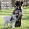 Dog willing to stick up for a goat against bullies. - Adorable Dog Pics