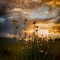 Wildflower Sunset - Joe Graf - Amazing photos